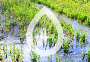 伏流式人工湿地システム導入支援